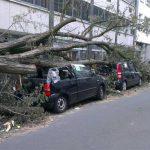 Totalschaden nach einem Sturm