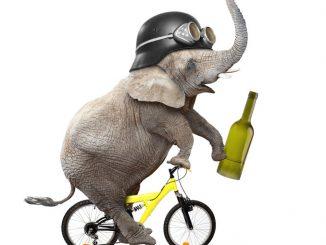 Betrunkener Elephant auf dem Fahrrad