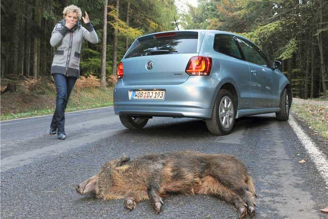 PKW Wildunfall mit einem Wildschwein