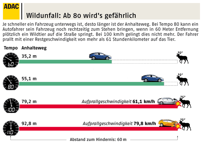 Grafik Bremsweg bei einem Wildunfall